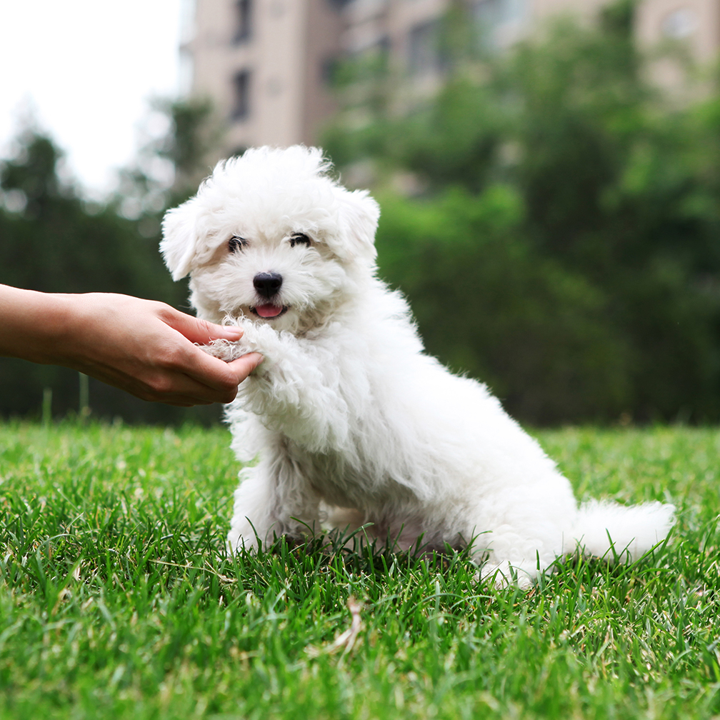 Cute Dog Shaking Hand
